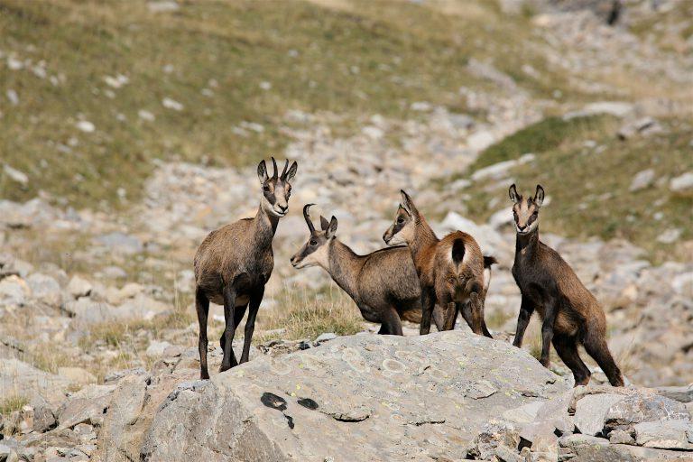La faune animale sur le territoire communal