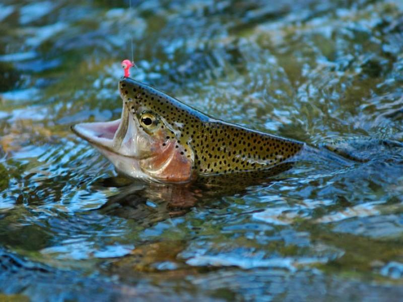 Les dialogues sur la pêche le domaine de Léningrad